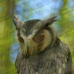 Chestnut Centre Otter, Owl and Wildlife Park