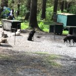 Photo de Seavey's IdidaRide Sled Dog Tours