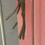 Jane Barleycorn's entry door handle
