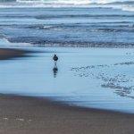 Foto de Karekare Beach