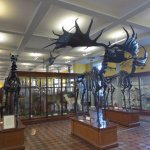 Photo de National Museum of Ireland - Natural History