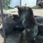 Photo de Henry Vilas Zoo