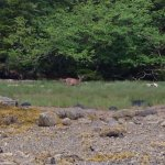 The Blacktail deer that seemed to be watching us more than we were watching it.