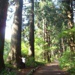 Photo of Hakone Pass Tourist Information (Michi-no-Eki)