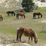 Ponies of Shackleford