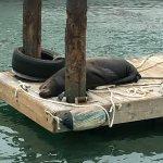 sleeping sea lion by the docks