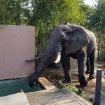 Foto de Honeyguide Tented Safari Camps