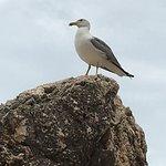 Photo de Calampiso Sea Country Resort
