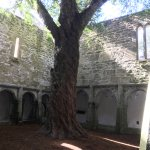 The yew tree and courtyard
