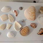Just a few of our favorite shells