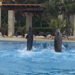Photo de Dolphinaris Tulum