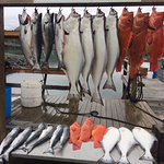 Alaska's Kodiak Island Resort Resmi