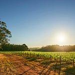 Brown Hill Estate Vineyard