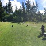 Bellissimo, in mezzo alla natura, mi ha fatto innamorare del golf