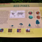 Red Pines info sign