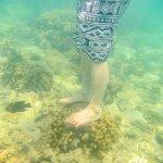 Photo de Sapi Island