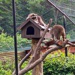 Wildpark Christianental Foto
