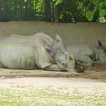 Photo of Parc Zoologique d'Amneville