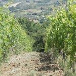 Photo de Tuscan Wine Tours by Grape Tours