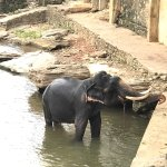 Photo de Hotel Elephant Bay