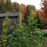 Adirondack Growl & Grub