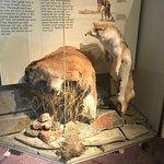 Head-Smashed-In Buffalo Jump Foto