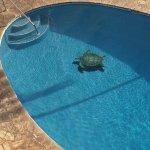 Hololani Resort Görüntüsü