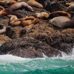 Beautiful seas and some lazy sea lions.