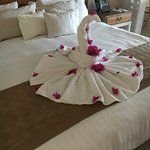Pretty towel animals every day on our bed from housekeeping