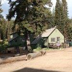 Foto di Montecito Sequoia Lodge