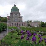 Special purple irises at St Joseph's Oratory