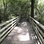 Boardwalk through the Corkscrew Swamp.