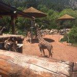 Our giraffe friends at Cheyenne Mountain Zoo