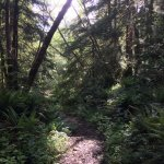 Example of Tillamook Trail and single track