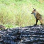 Fox Den in Grand Teton Park