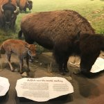 Foto de First Peoples Buffalo Jump State Park