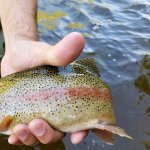 Beautiful coloring on these trout