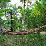 Our tropical green garden