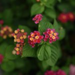 floras bonitas