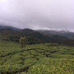 Foto de Tea Gardens