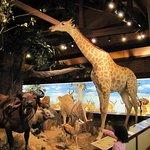Harber Wildlife Museum Foto