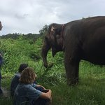 At thom's farm have sufficient food for elephants such as banana grass,banana fruit and river
