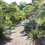 More Plants suitable for Arid Conditions