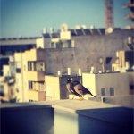 Love birds on the terrace