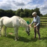 We have grqazing for horses available