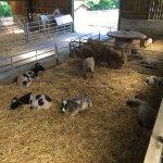 Godstone Farm - animals