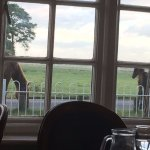 view from restaurant - young foal with mum!