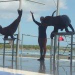 Sea lions - show