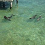 Sea lions (Oskar and his mum)