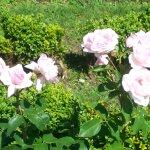 Belles roses du Jardin